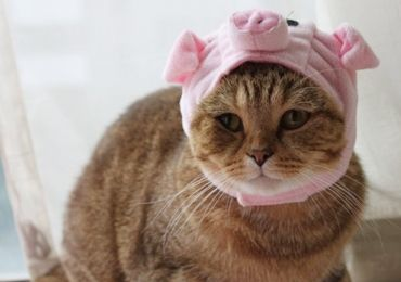 Pink Pig Cat Hat หมวกหมูสีชมพูสำหรับน้องแมว 240 บาท