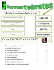 Invertebrate Facts, Worksheets, Types & Specie Information For Kids