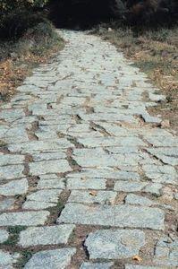 How To Build A Stone Walk Around Pine Tree Roots Ehow Broken Concrete Hardscape Concrete Patio