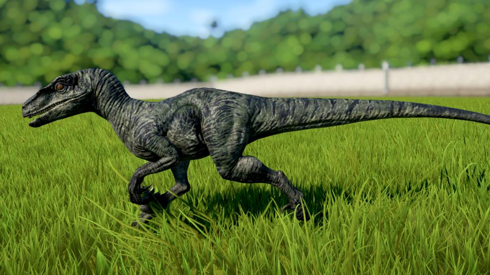 Velociraptor in 2020 (With images) Velociraptor