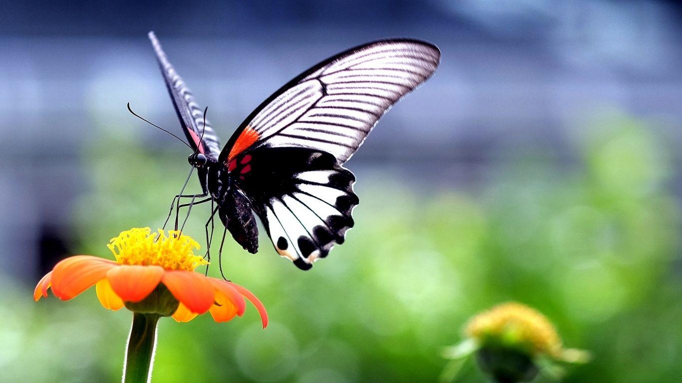 Обои насекомое, цветы. Природа foto 6