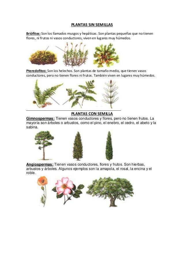 Plantas sin semillasbri fitos son los llamados musgos y hep ticas son plantas peque as que no - Cuales son las plantas con flores ...
