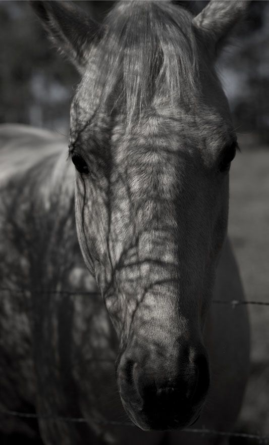Feathermark_Hunter_Valley_Horse_4037.jpg