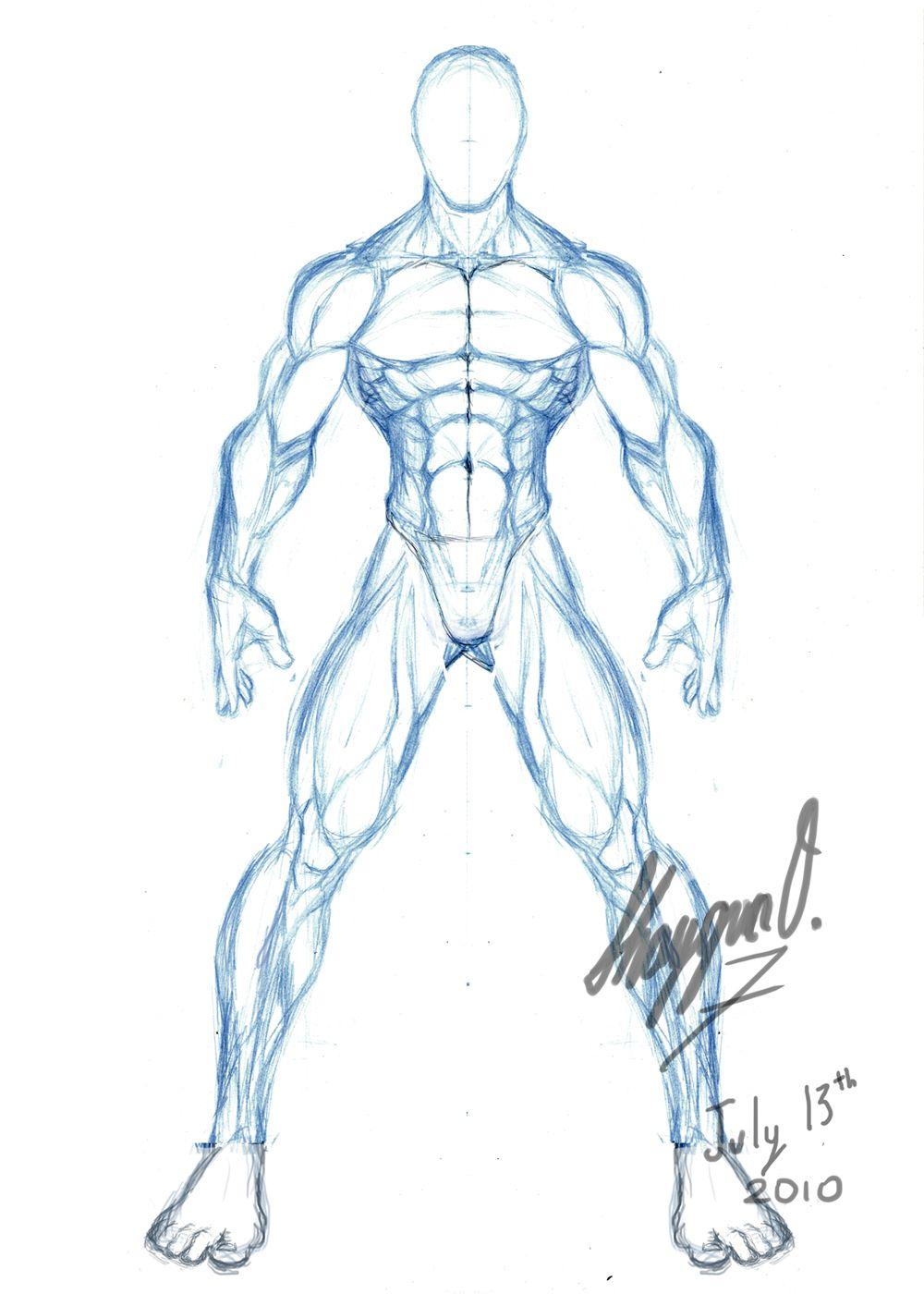 male anatomy template front by shintenzu on deviantart anatomy