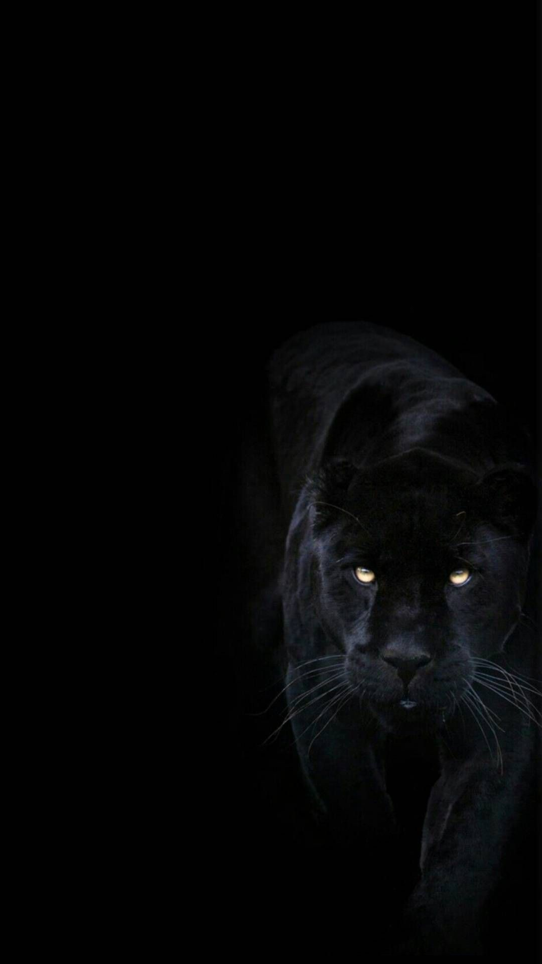 Dark Black Panther Animal Wallpaper