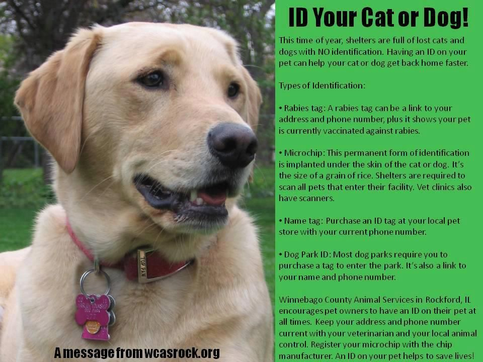 Please Id Your Pets Dog Spay Dogs Animal Education