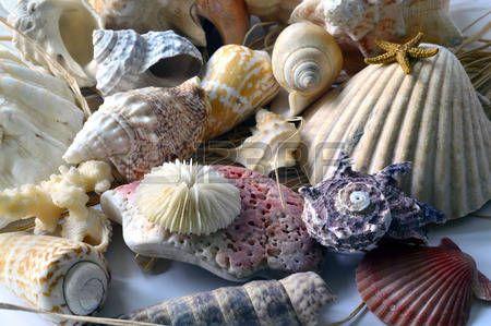 Colecci n de conchas de colores con diferentes formas sobre el fondo  Foto de archivo