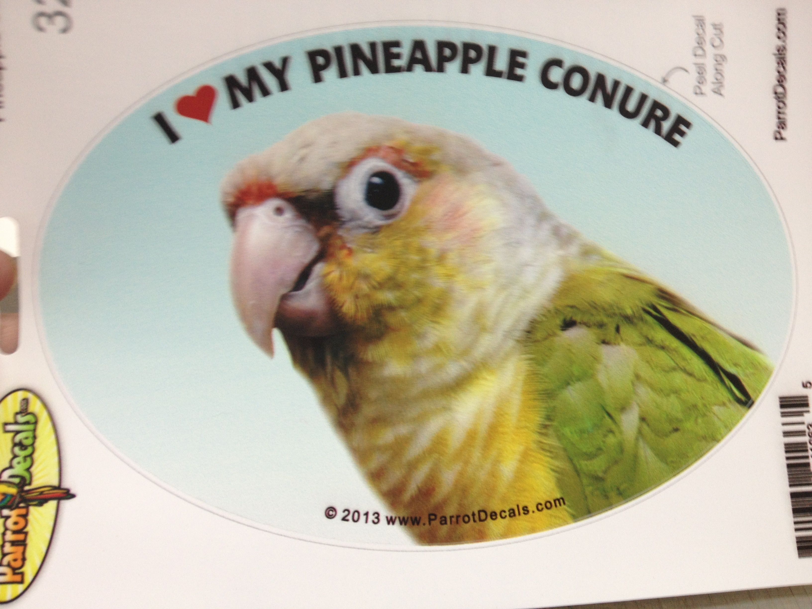 Pin on Pineapple Conure Parrots / Exotic Birds