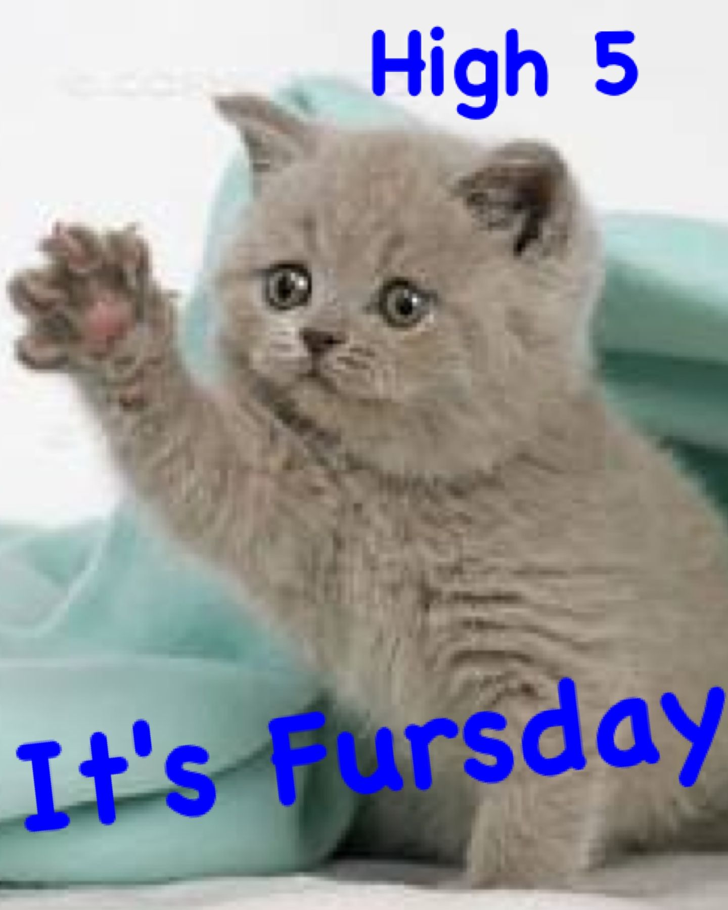 High 5 Fursday | Kitty Cats! | Kittens cutest, Funny cat ...