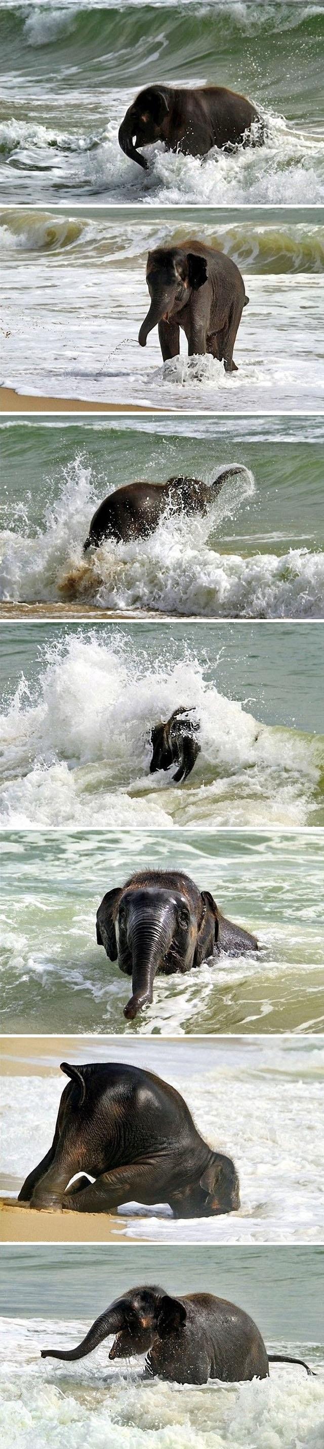 Happy elephant at the beach