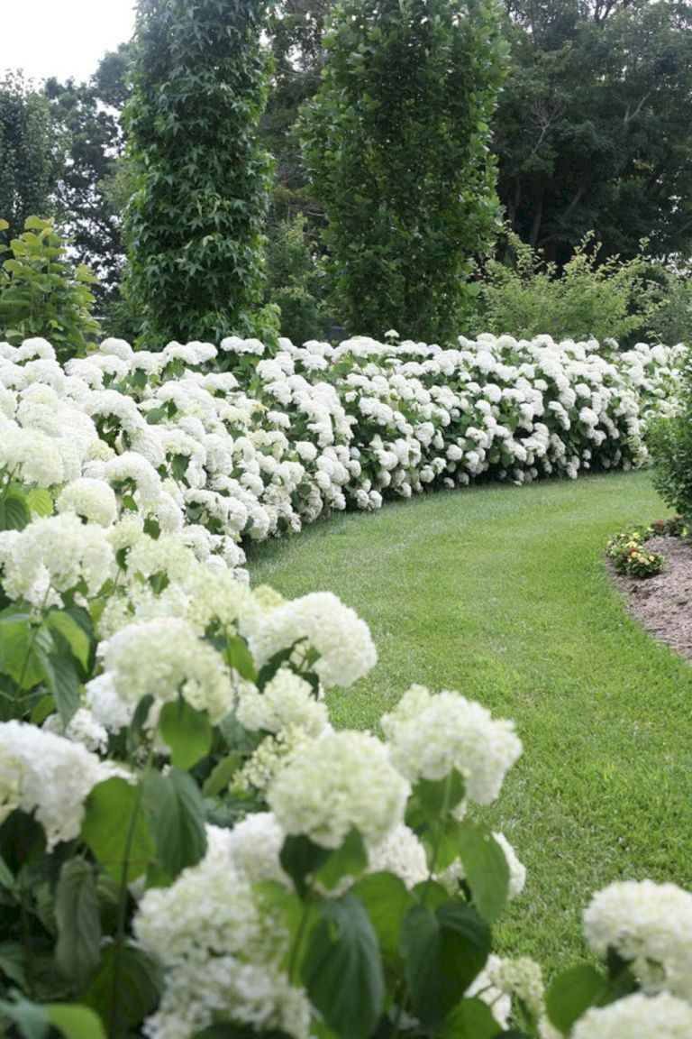 15 Top And Most Beautiful Hydrangeas Landscaping Ideas To Inspire You Decoor Hydrangea Landscaping Dream Garden Backyard Landscaping