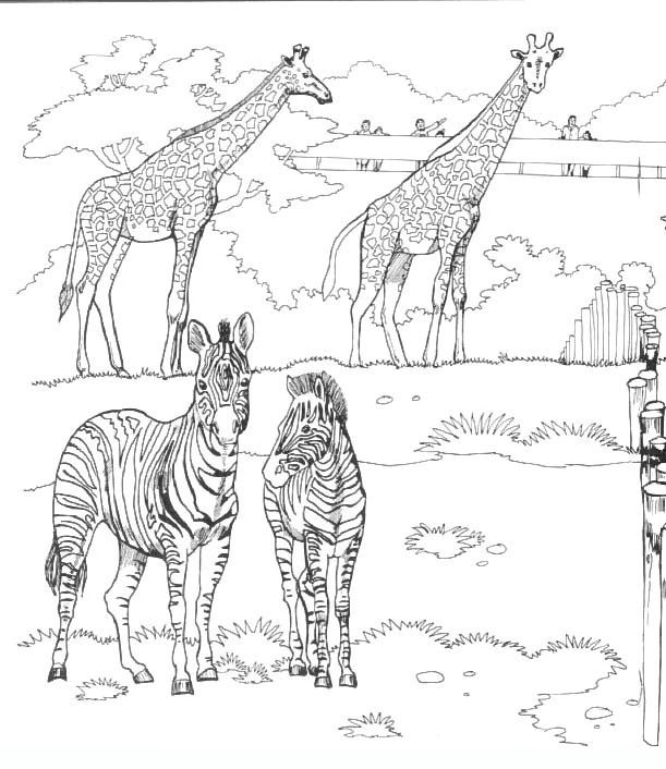 savanna_2 Adult coloring pages