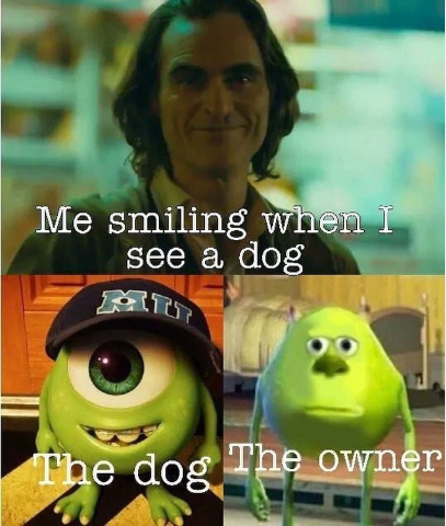 Newest 30 Funny Dog Memes In 2020 Funny Dog Memes Funny Memes Funny Dog Pictures