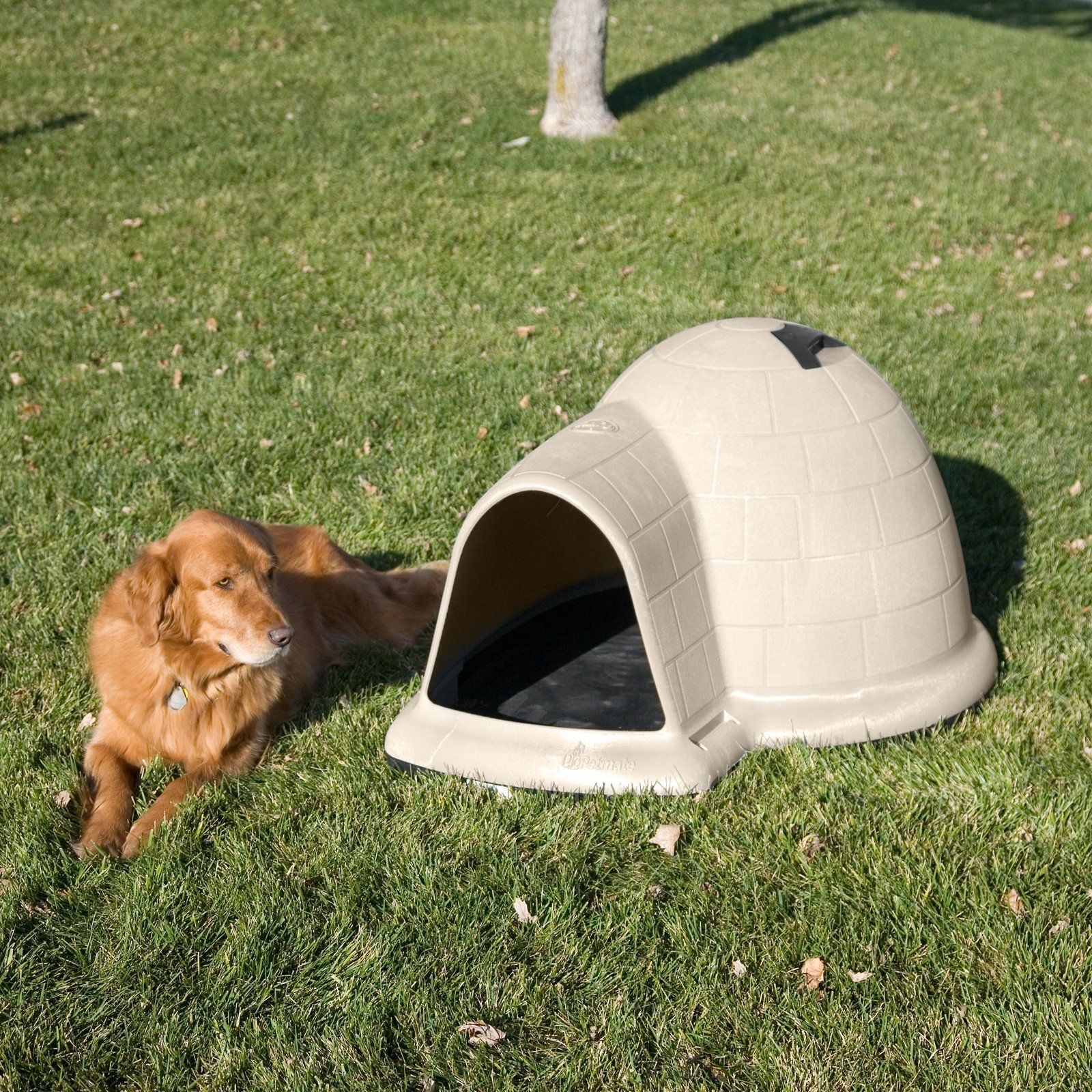 Igloo Dog House Not Just For Eskimos Anymore With Images