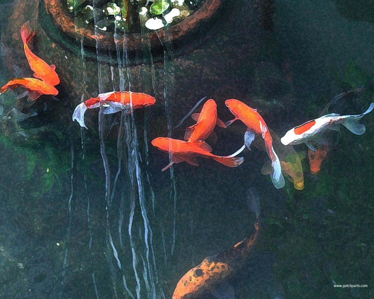 Koi fish pictures to facebook share to pinterest for Koi pool paint
