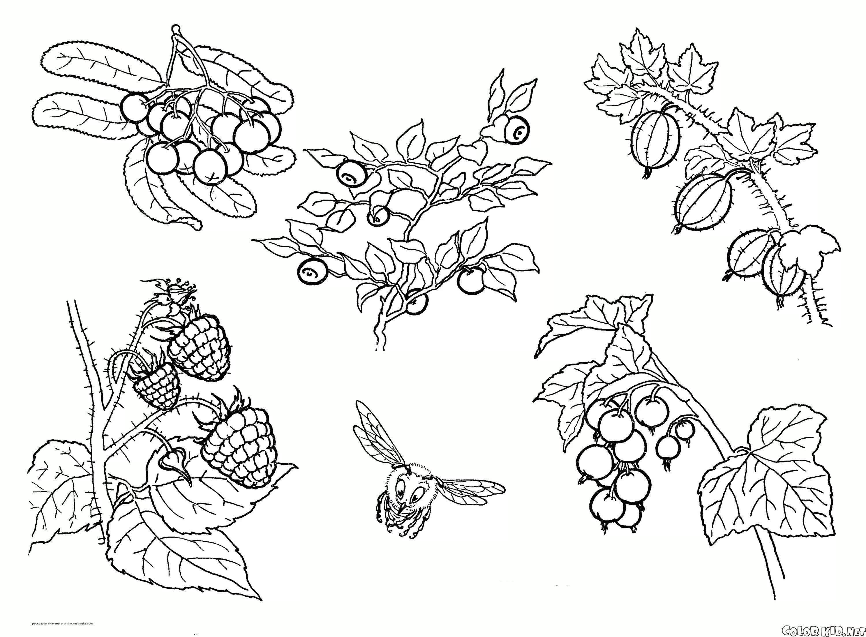картинки разных ягод нарисовать или глубокую