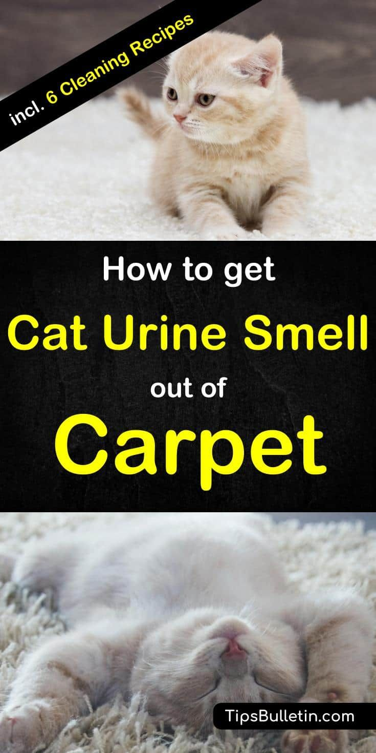 Vinegar Carpet Cleaner Cat Urine