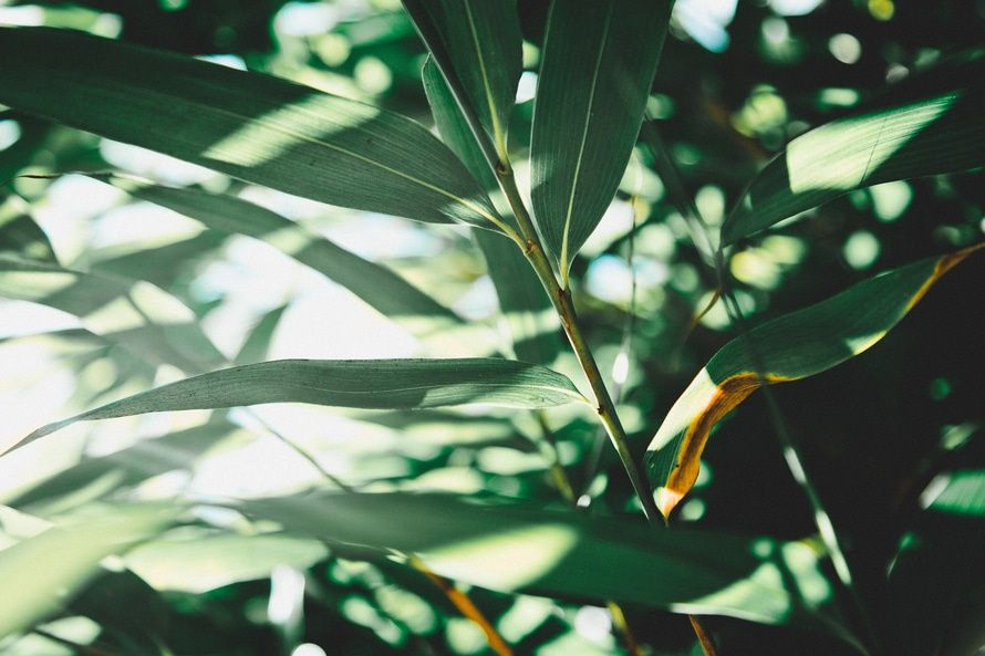 New free stock photo of nature plant leaves   Download it on Pexels