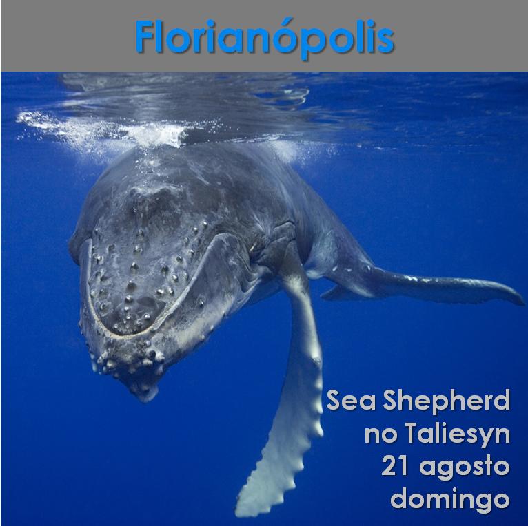 Florianópolis: Sea Shepherd no Taliesyn www.facebook.com/events/306933579653545 #eventovegano #veganismo  #vegan #vegetarianismo #govegan #aplv  #semleite #zeroleite #lactose #semlactose #zerolactose #floripa #florianopolis #florianópolis #coxinha #coxinhavegana #coxinhavegan