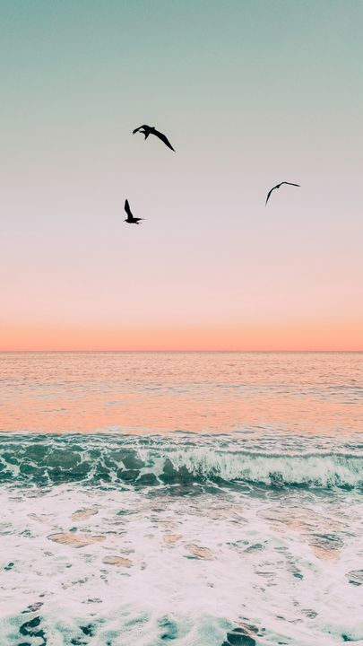 The latest iPhone11, iPhone11 Pro, iPhone 11 Pro Max mobile phone HD wallpapers free download, birds, sea, waves, foam, sunset - Free Wallpaper | Download Free Wallpapers