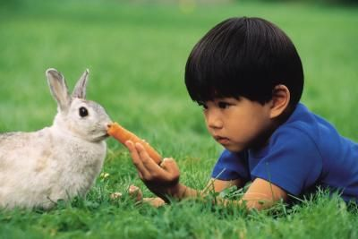 Rabbits have teeth that grow continually throughout their