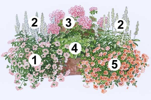 Trendige Blumenkästen Zum Nachpflanzen   Balkon, Garten Und Pfirsiche Blumen Fur Balkon Im Schatten Pflanzen