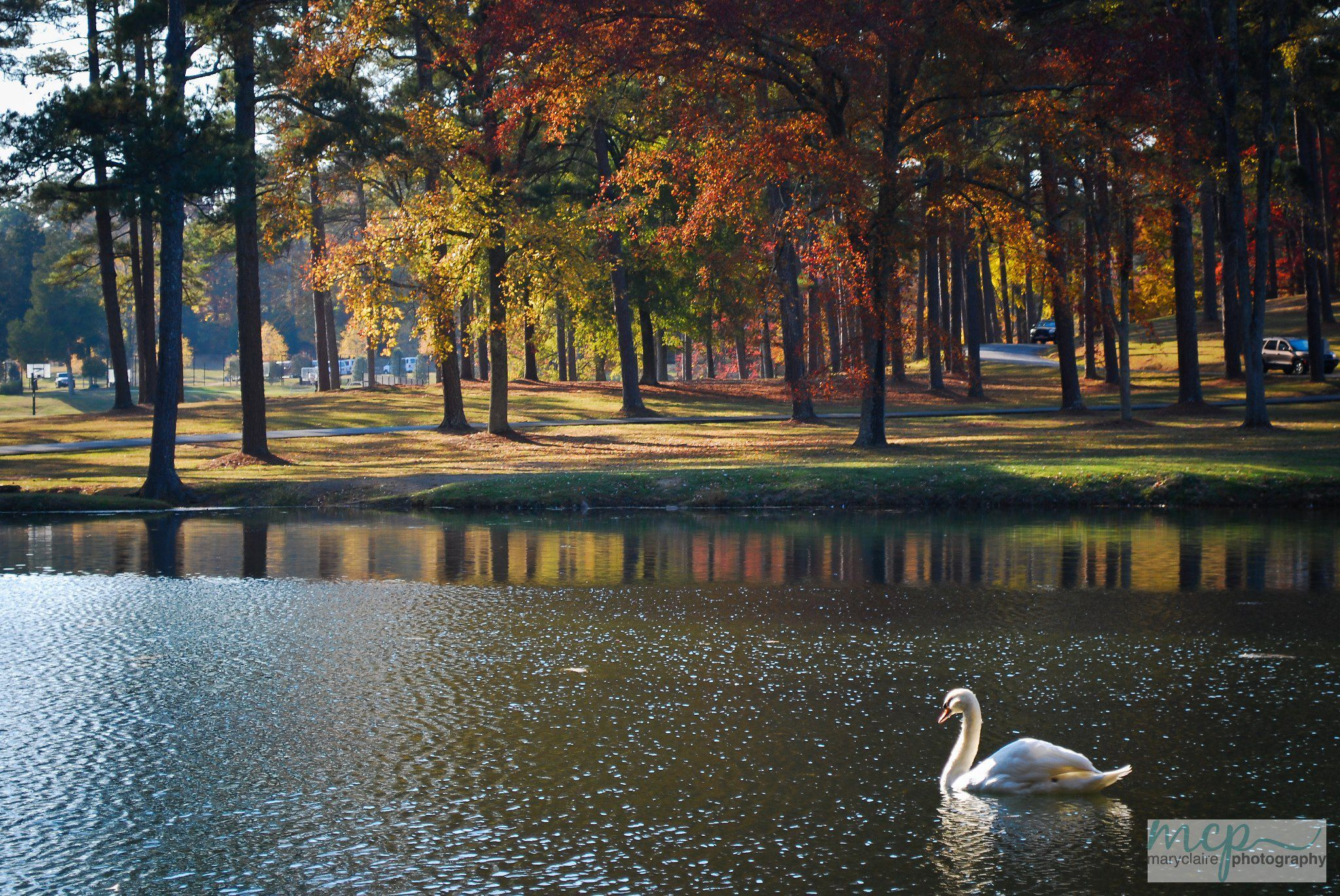 Swan Lake At Berry College In Rome Georgia