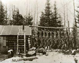 Vintage Adirondack Hunting Cabin Vintage Deer Hunt Log