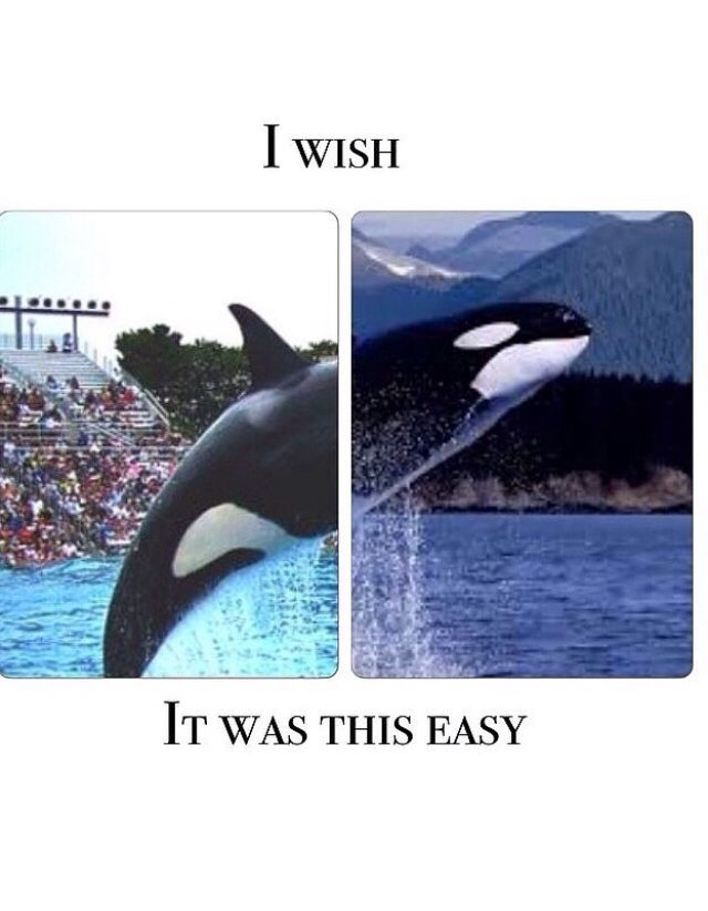 One day, all orcas will be wild and free, one day