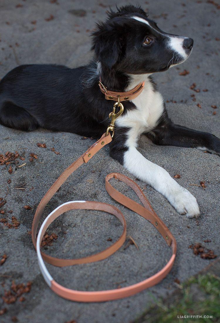 Create Your Own Leather Dog Collar Leash Diy Dog Collar Dog