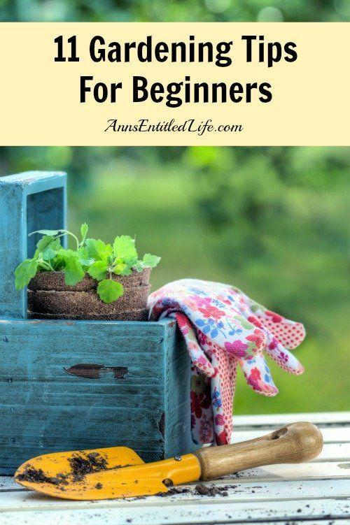 11 Gardening Tips For Beginners; Just starting a brand new garden ...