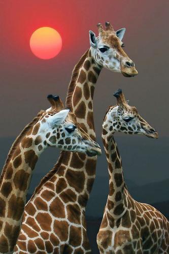 :Giraffe by GffDesigner - via: plasmatics - Imgend