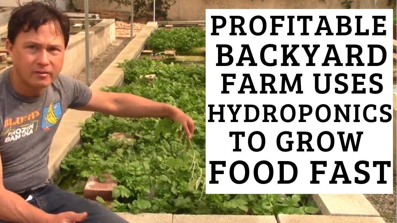 Profitable Backyard Farm uses Hydroponics to Grow Food