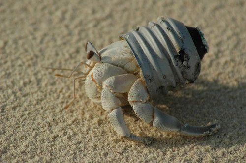 Funny Hermit Crab