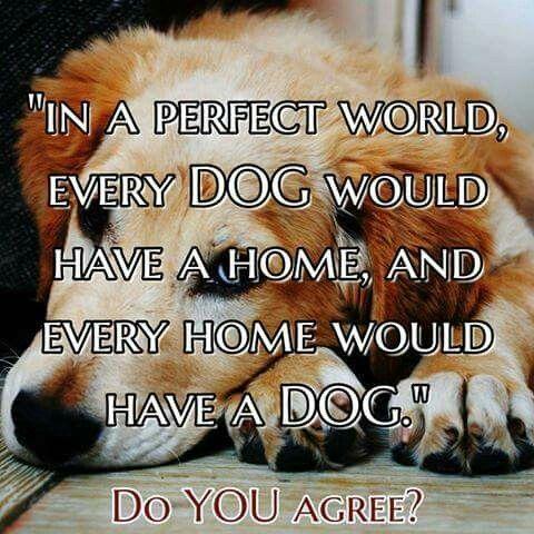 Every dog deserves a safe loving home