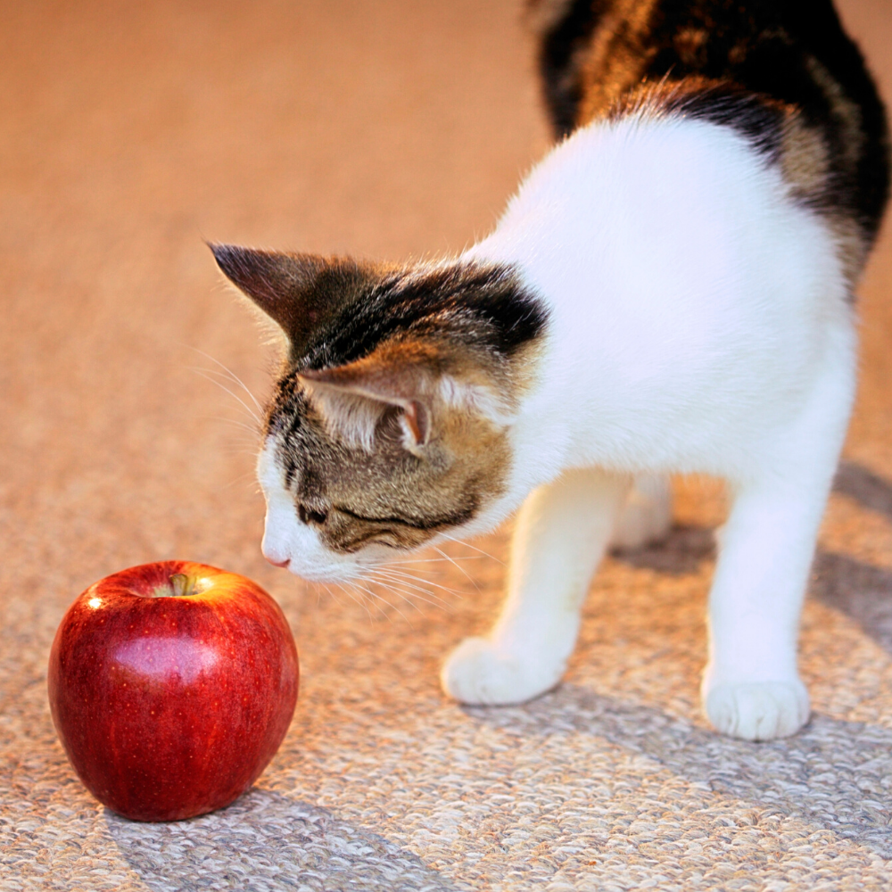 Are any fruits that cat can safely eat? Yes, but its