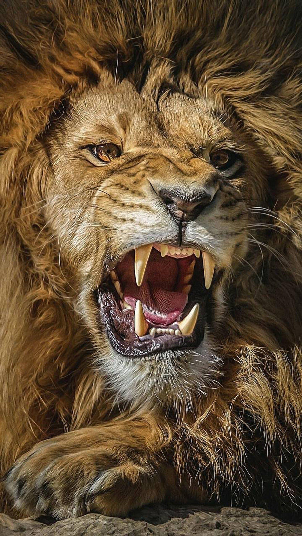 Barbara Google Seni Singa Fotografi Hewan Binatang