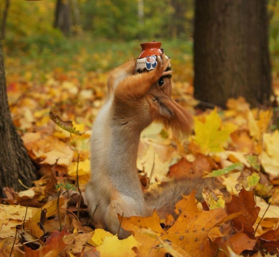 Смешные картинки про октябрь, картинки