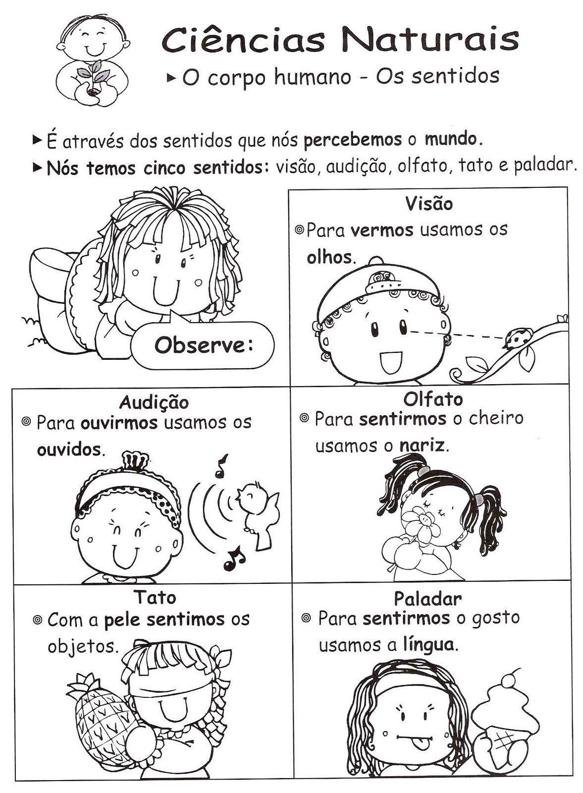 5 senses | brazilian portuguese | Pinterest | Desarrollo físico ...