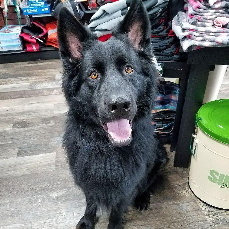 Cutecustomeralert This Handsome Pup Visited Pet Valu Cumberland Ri To Pick Out More Treats Pet Valu Pets Pup