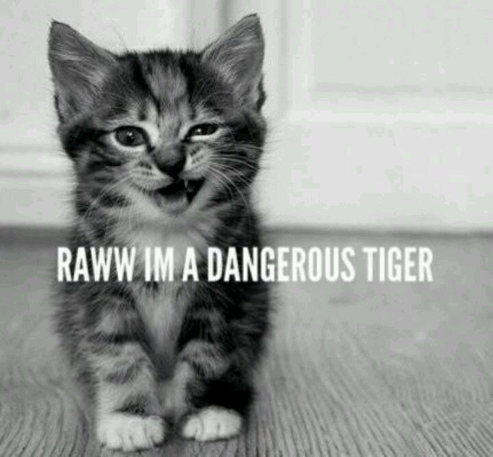 Tiger is what my baby calls me!