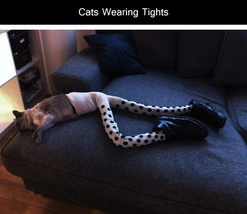 http://thankyouforthefandom.tumblr.com/post/65899715010/tastefullyoffensive-cats-wearing-tights