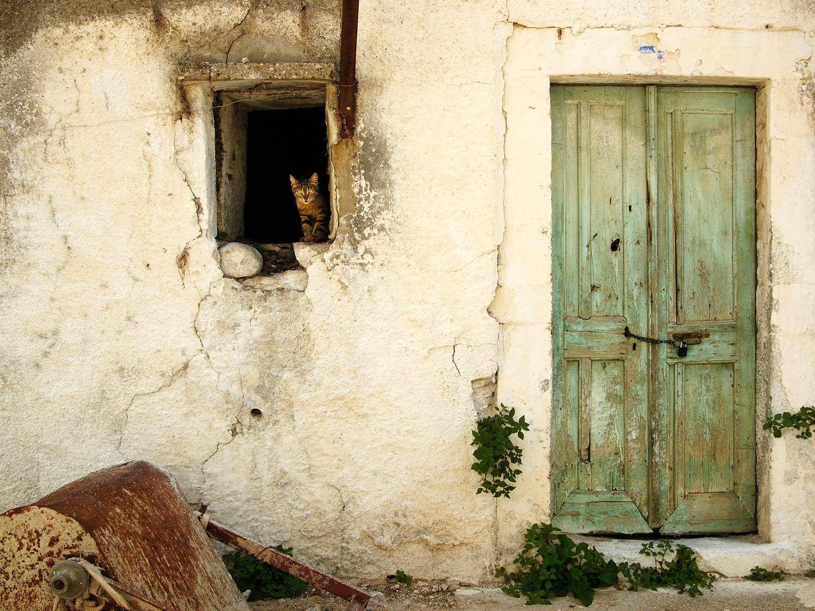 Pin By Shady Al Grager On Desktop Wallpapers Cat Window Green Door House Windows
