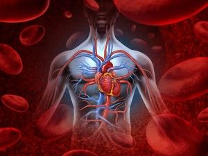 10 Facts About the Heart That You Didn't Know. The average heart beats 72 times a minute, 100 000 times a day, 3 600 000 times a year and 2.5 billion times during the life. Be careful with it! #heart