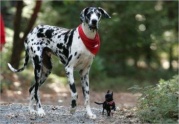 Etapas de Crecimiento del Perro – Retraso-If you're an animal lover, please visit www.whatcanwe.org.