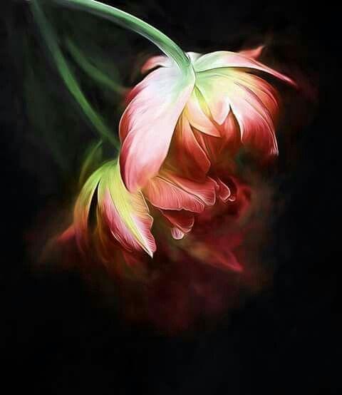 pin von s a auf flowers  tulpen flora