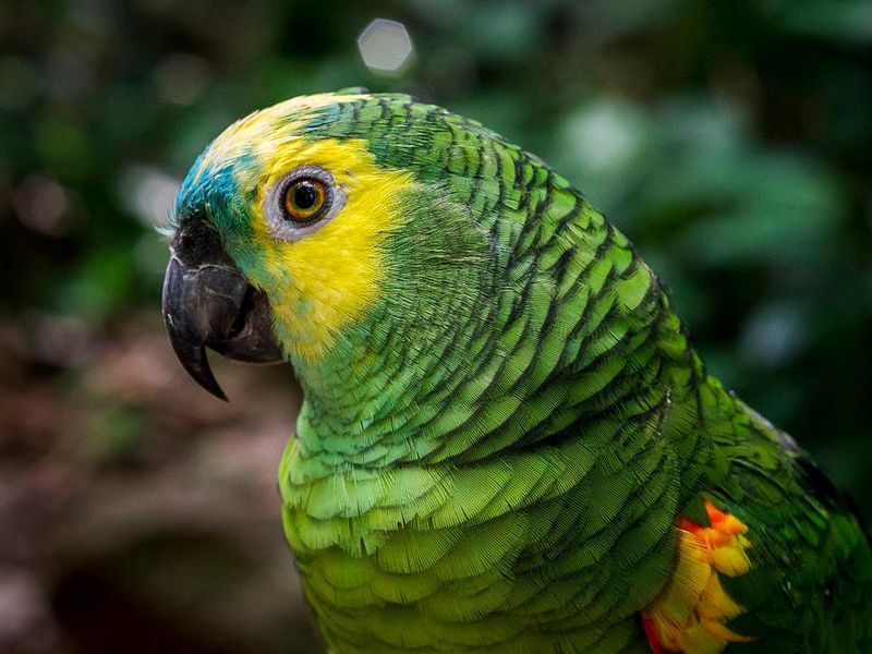 Parrot Genes Reveal Why The Birds Are So Clever Long Lived