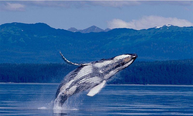 اكبر حيوان في العالم الحوت الازرق سوق الطيور Whale High Resolution Wallpapers Nature Photographs