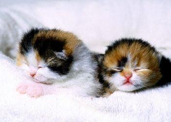 Little Sleepyheads Adorabili Gattini Cucciolo Di Gatto Animali Appena Nati