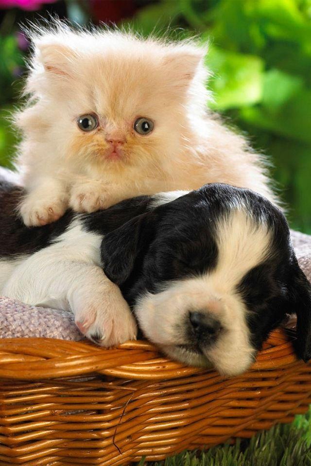 Puppy And Kitten Iphone Wallpaper Cute Cats And Dogs Cute Puppies And Kittens Kittens And Puppies